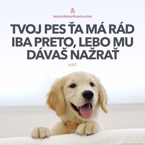 Tvoj pes ťa má rád iba preto, lebo mu dávaš nažrať