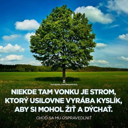 Niekde tam vonku je strom, ktorý usilovne vyrába kyslík, aby si mohol žiť a dýchať. Choď sa mu ospravedlniť.